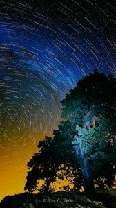 Stars wheeling above oak tree